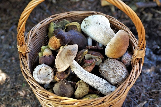 basket-of-mushrooms-4439653_1280.jpg