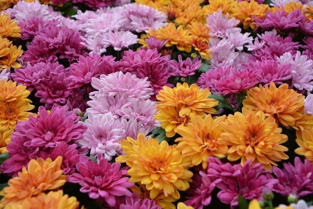 flower-3756927_1280.jpg